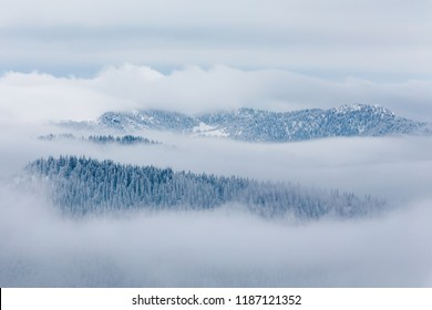 Cold winter with snowy trees and foggy landscape