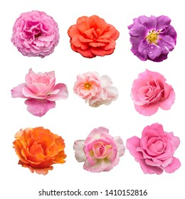 colection of nine beautiful purple, orange, pink rose flower isolated on white background with paths