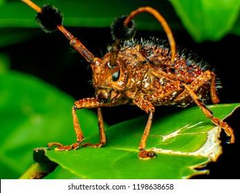 Coleoptera-Cerambycidae is a plant in sugar cane. Coleoptera-Cerambycidae worm is in the soil