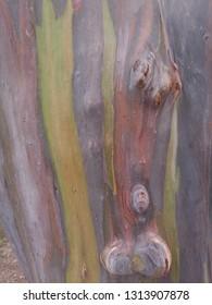 coler of tree bark for background