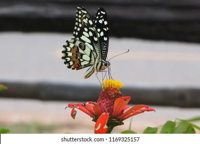Colerful beauty butterfly
