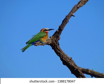 Colerful bird sitting on tree with blue sky
