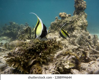 colerful fishes on corals an anemones