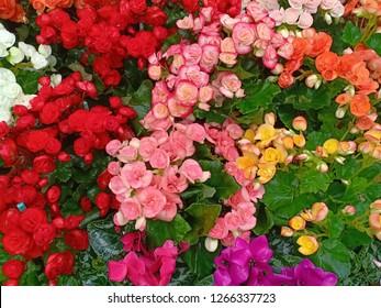 colerful flower backgroud