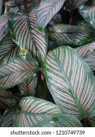 Colerful leaf background.