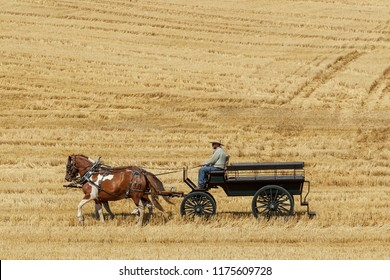 Colfax, Washington USA - 09-03-2018. Editorial photo of men driving draft horses to pull a wagon at the annual Colfax threshing bee in Colfax, Washington..
