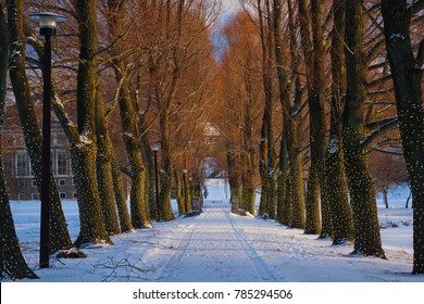 Colgate Willow path in the winter