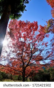 Collaboration of Colorful autumn leaves of maple stained in red and striation
