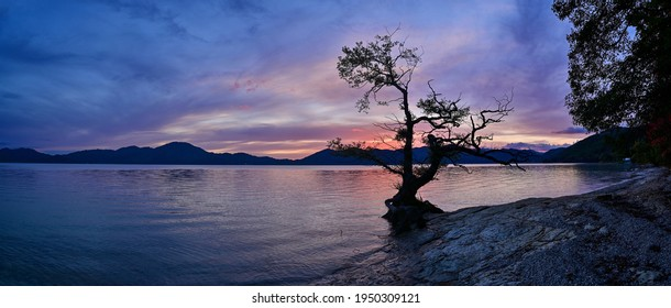 Collaboration scene of tree with unique shape silhouette tree and sunset over Lake Tazawa at Akita