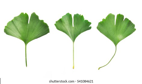 Collafe of three Ginkgo Biloba leaves isolated on white background