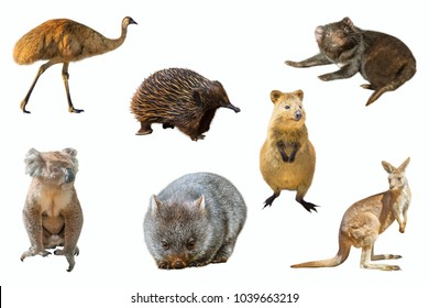 Collage of Australian animals, isolated on white background. The Emu, Echidna, Tasmanian Devil, Wombat, Kangaroo, Quokka and the Koala.