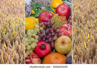 collage autumn - thanksgiving fruit selection and ripe grainfield