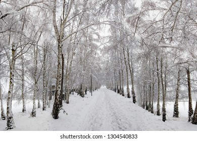 Collage of an avenue with birches covered in snow.