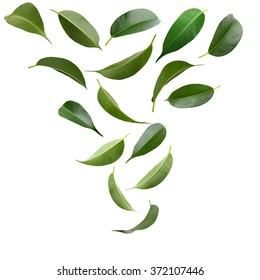Collage of beautiful green leaves isolated on white
