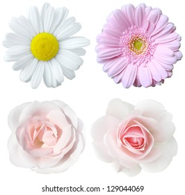 collage of bright flowers isolated