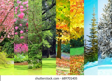 Collage of Cherry, maple, oak and cedar trees in four seasons. Spring, Summer, Fall and Winter.