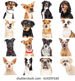 Collage of close-up portraits of sixteen different crossbreed dogs isolated on white