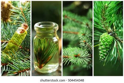 Collage of coniferous spa. Beauty treatment concept.
