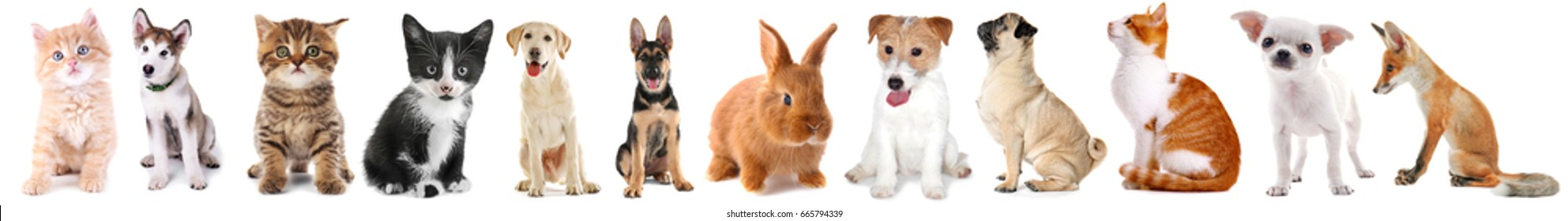 Collage of cute baby animals on white background - Shutterstock ID 665794339