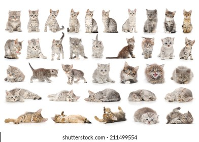 collage of cute small grey cats isolated on white