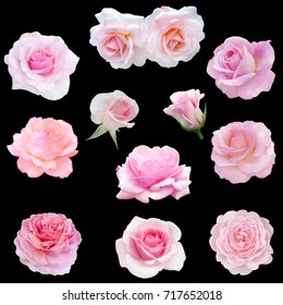 collage of delicate pink roses isolated on black background