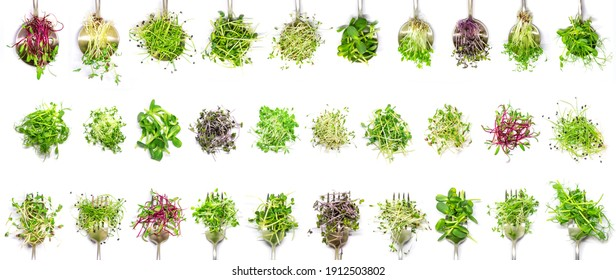 Collage of different microgreens on a white background. Selective focus. nature.