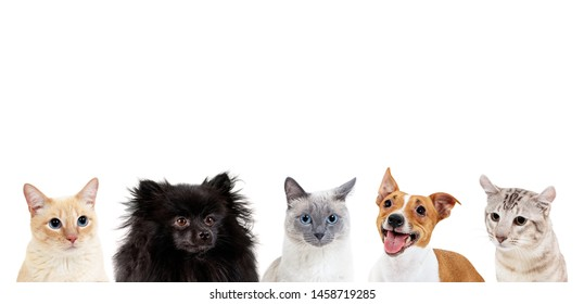 Collage of domestic animals with copy space over heads. Dogs and cats sitting together.