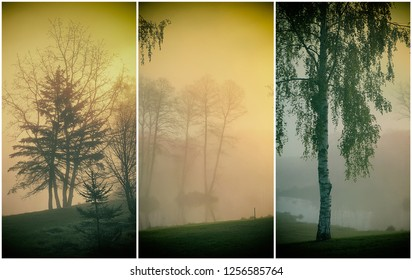 Collage of  early morning landscapes