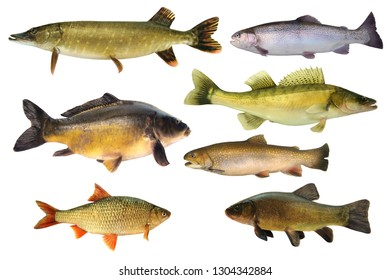 Collage of fish