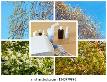 Collage of flowering trees and shrubs causing seasonal pollen allergies: birch, bird cherry, willow and coniferous strobiles. Medications and nebulizer for the treatment of spring allergy