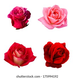 collage of four roses