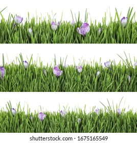 Collage of fresh green grass with flowers on white background. Spring season
