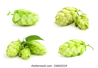 The collage fresh green hop isolated on white background.