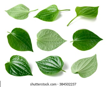 Collage of Green betel leaf heart shape isolated on white background