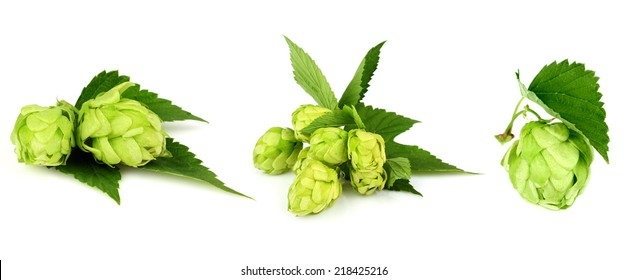 The collage green hop isolated on white background.
