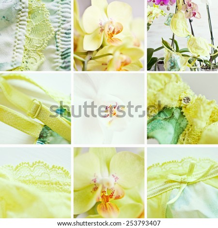 00f1dfca4 Collage Green Lingeries Part Orchids Spring Stock Photo (Edit Now ...