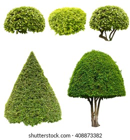 Collage green trees and bushes isolated on white background