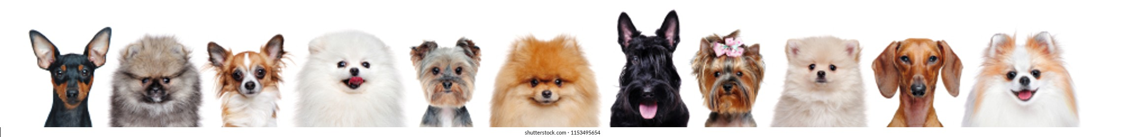 Collage of head portraits of different dog breeds