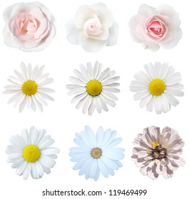 collage of isolated white flowers