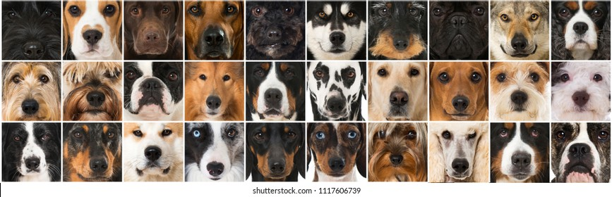 Collage of many dog heads