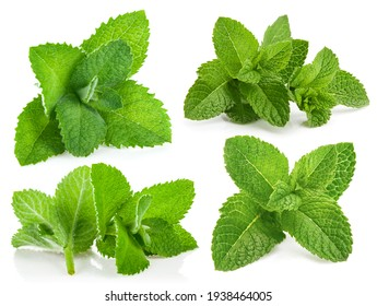 Collage mix set of Fresh green leaf mint. Isolated on white background.