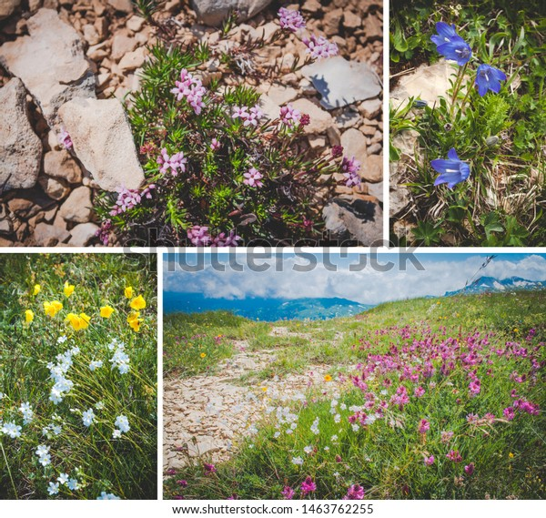 Collage Mountain Plants Landscapes Views Stock Image Download Now