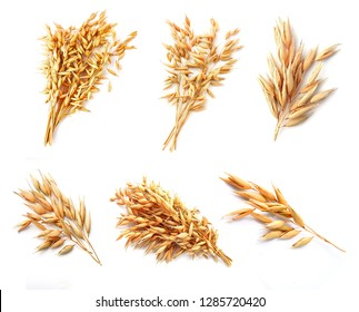 Collage oat plant  isolated on white close up .