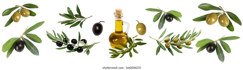 collage of olives, olive branches, olive oil bottle on a white background isolated - Shutterstock ID 1642034272