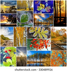 Collage on the theme of the autumn landscape. Russia, Siberia, Novosibirsk region