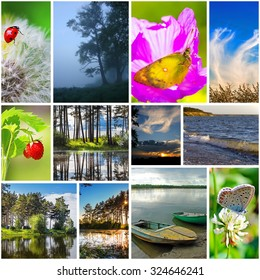 Collage on the theme of summer. The nature of Russia,Siberia,Novosibirsk region