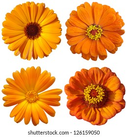 collage with orange flowers