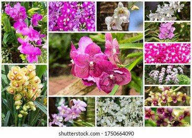 Collage of orchid different flowers