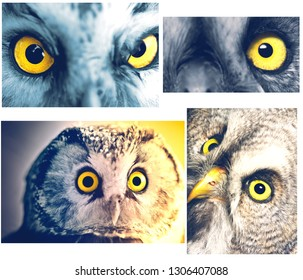 collage from Owls portraits