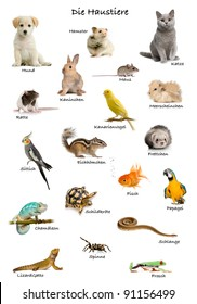 Collage of pets and animals in German in front of white background, studio shot